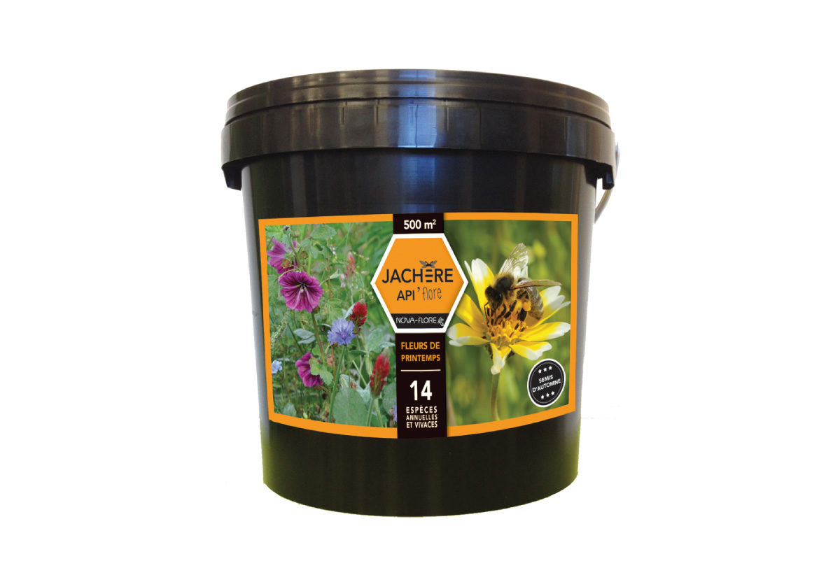 Jachère Mellifère Fleurs de Printemps - Nova Flore Jardin