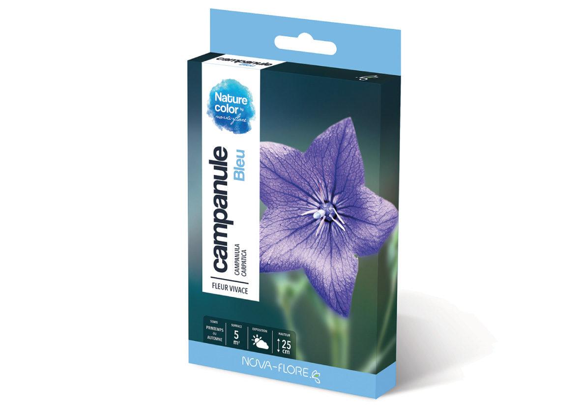 fleur campanule bleue