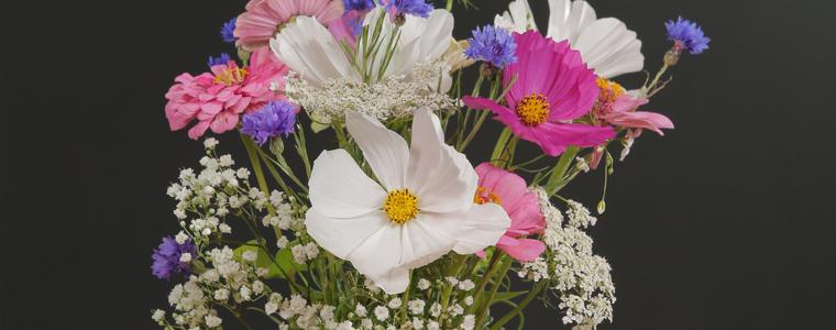 Mélange de prairie fleurie pour faire des bouquets de fleurs